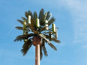 antenna tree 2.jpeg