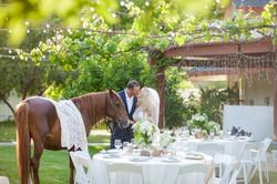 Wedding Oasis Finals 0056