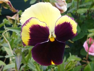10. Flores comestíveis