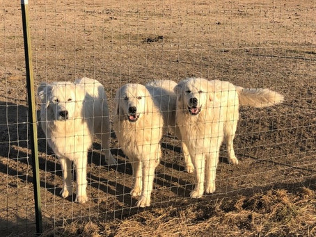 Resilience & Coping Skills – What You Can Do To Support Your Dog