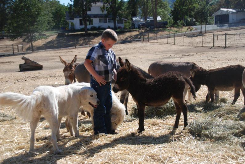 Tessa w foal.jpg