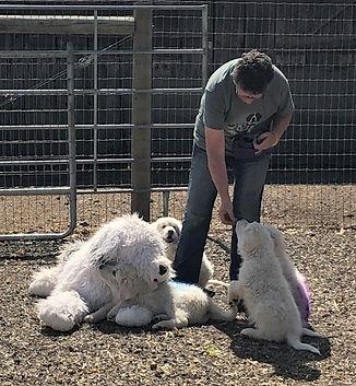 sheepdog training.JPG