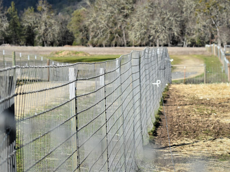 Compassionate Use of Electric Fencing For Maremmas