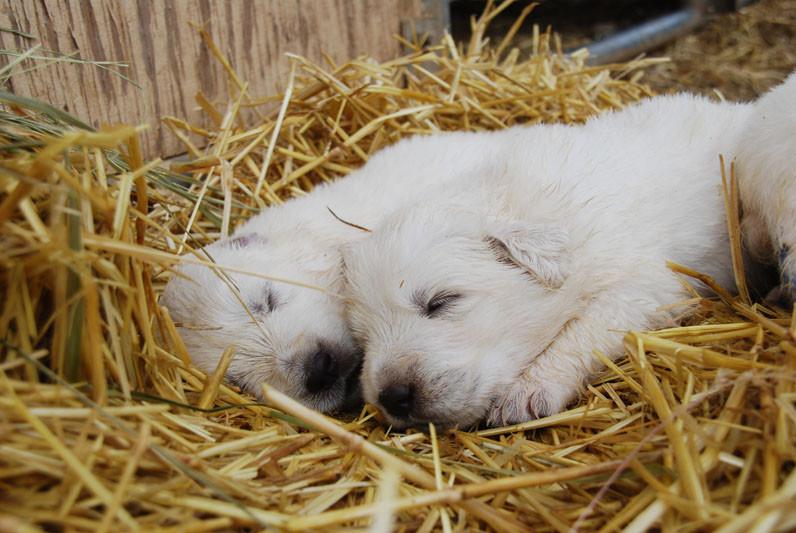 pups sleep 7-8.jpg