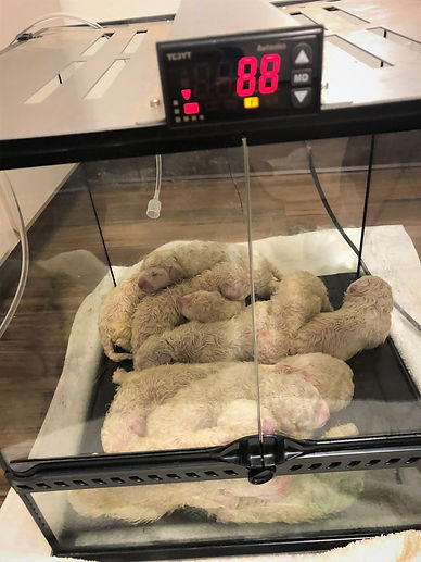 BC 2019 incubator 1500.JPG