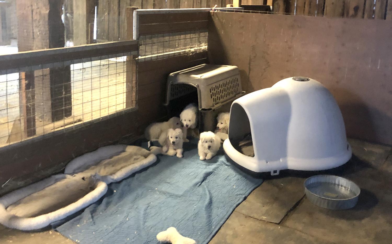 SB 2019 8-18 pup housing.jpg