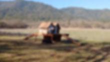 Toni w dog house and pig.jpg
