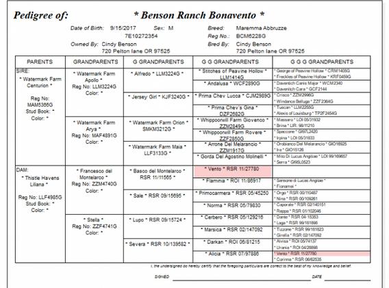 Boni-pedigree-700x544.png