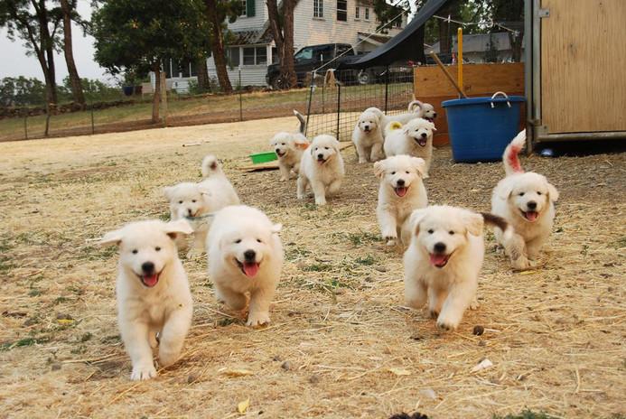 running puppies.jpg