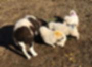 Panda w pups 10-25-17.jpg