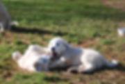 pups play 1-25.jpg