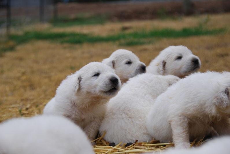 pups look 7-8.jpg