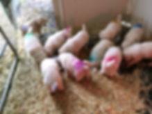 Cami pups eat 12-2 c.jpg
