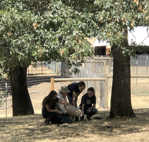 Puppy Socialization – A Family Affair