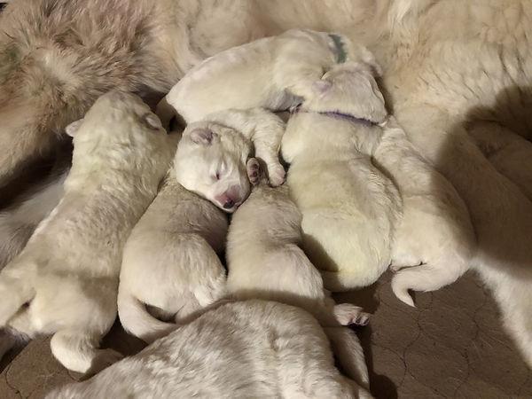 SM 2021 4 days puppy pile.jpg