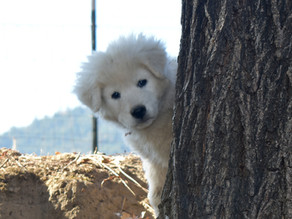 """Our Selection Process for Pups and Owners - And Why We Do It This Way - """"See The Dog"""""""