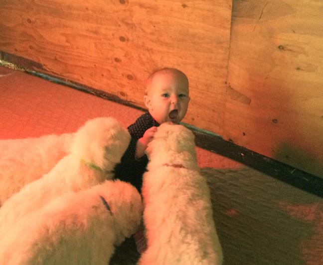 Amelia w Lili pup 10-13-17 c.jpg