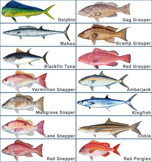 1/2 Day Near Shore Fishing Charter