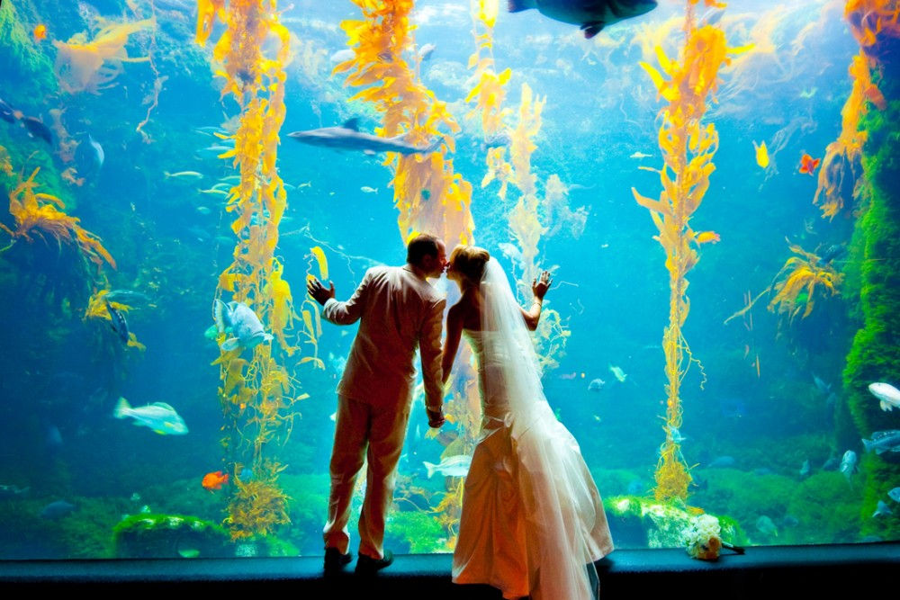 birchaquarium1_couple kissing-1000x667