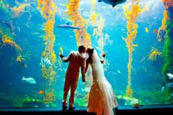 birchaquarium1_couple kissing-1000x667
