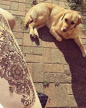 henna and dogs.jpg