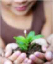 plantpic.jpg