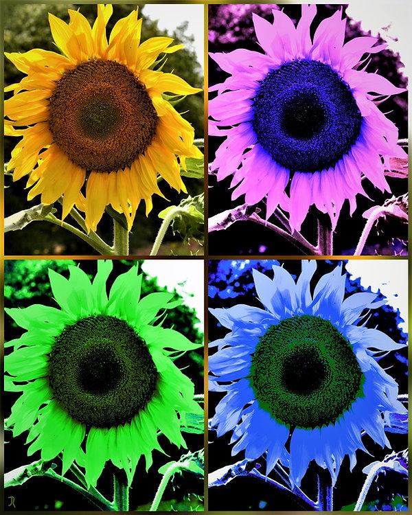 Verfremdung Sonnenblume_LI.jpg