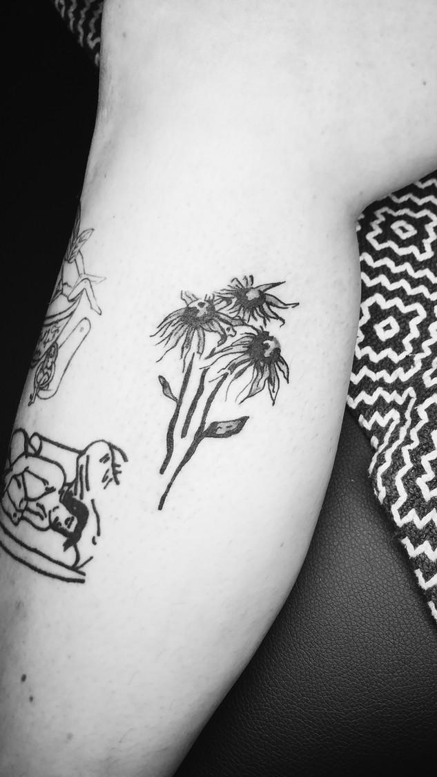 Sunflowers_Paula