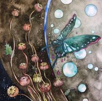 SOMARU-Butterfly