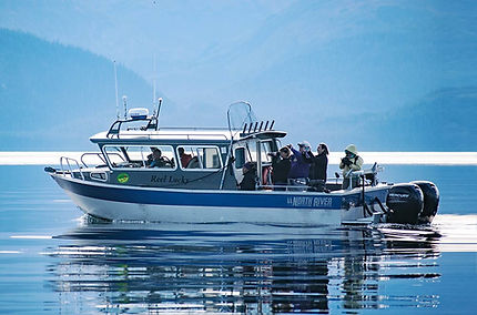 Juneau whale watching