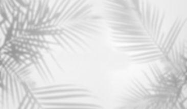 fond-abstrait-des-ombres-en-feuille-de-p