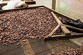 Séchoir_cacao_-_Roça_Bela_Vista_-_Photo_