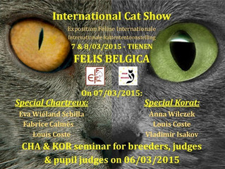 Korat Breed Seminar and special Show