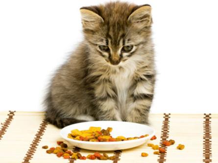 Seu gato não quer comer. O que fazer?