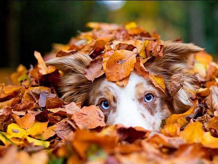 Outono e os Pets: umidade do ar, frio, hidratação...