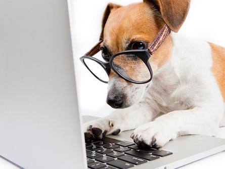Conheça as 10 raças de  cachorros mais inteligentes!