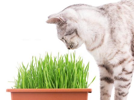 Como plantar para você e seu pet