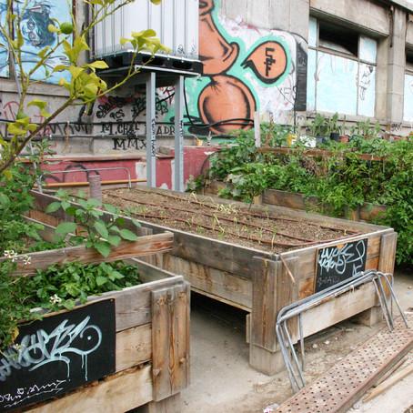 Huertos urbanos, la revolución silenciosa