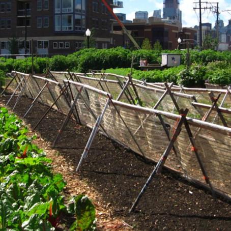 Los huertos urbanos podrían alimentar al 15% de la población según estudio