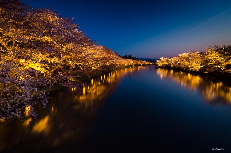 Sakura lit at night, reflecting off the west