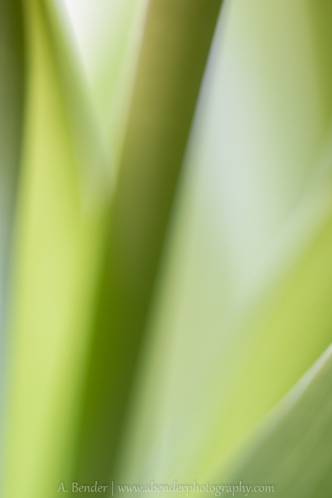 abstract image of stems and leaves, a bender photography