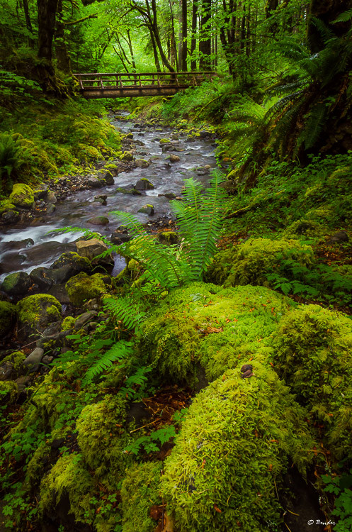 Gorton Creek in the Mt Hood National Forest