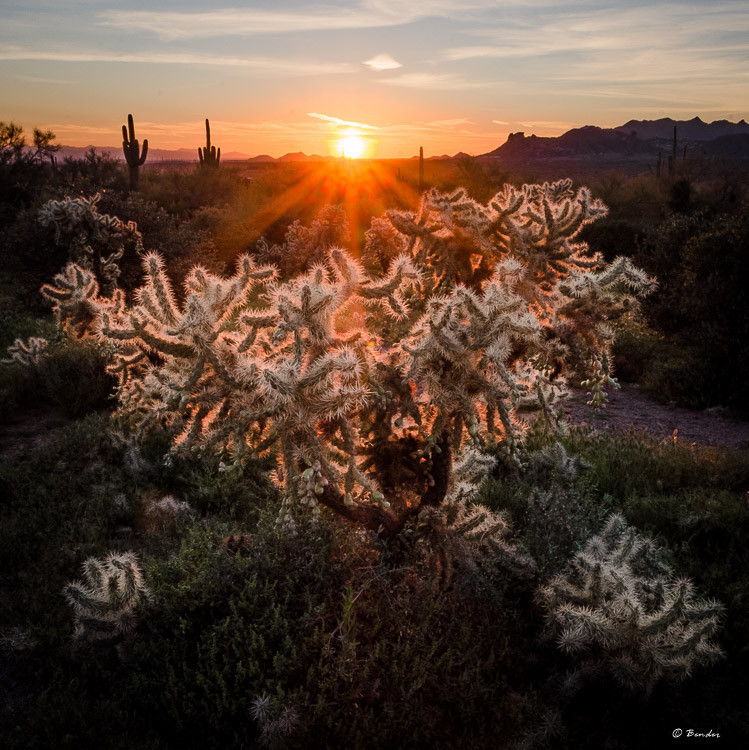 """Cholla Sunset"""