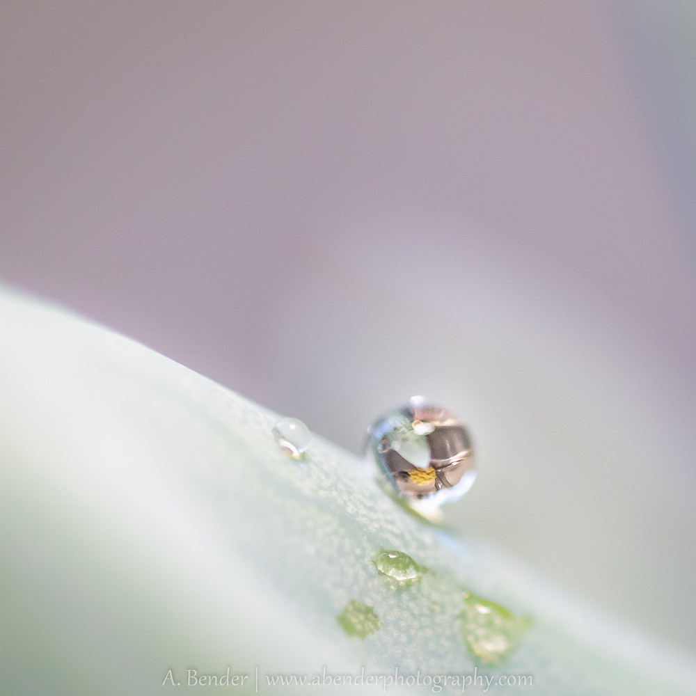 water drop on green succulent reflecting kitchen image
