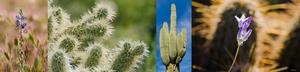 Series of four desert detail images