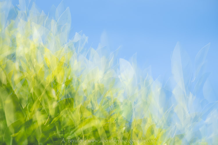 abstract impressionistic bushes, California