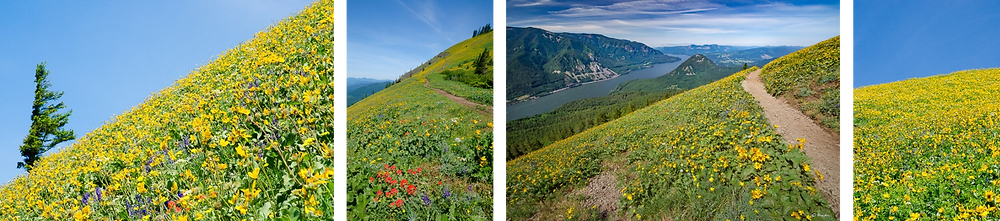 Four scenes from the Dog Mountain trail