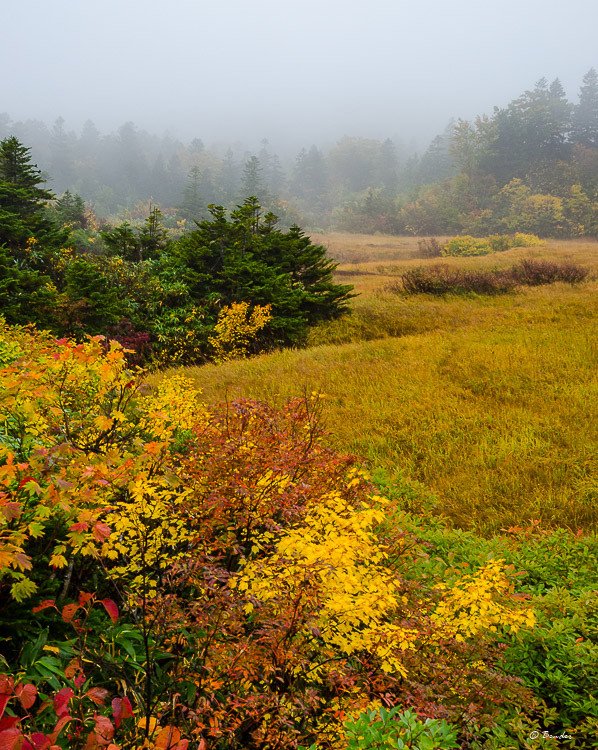 Alpine Marsh in autumn color and cloud