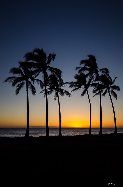 Palm Tree Silhouettes at Sunset