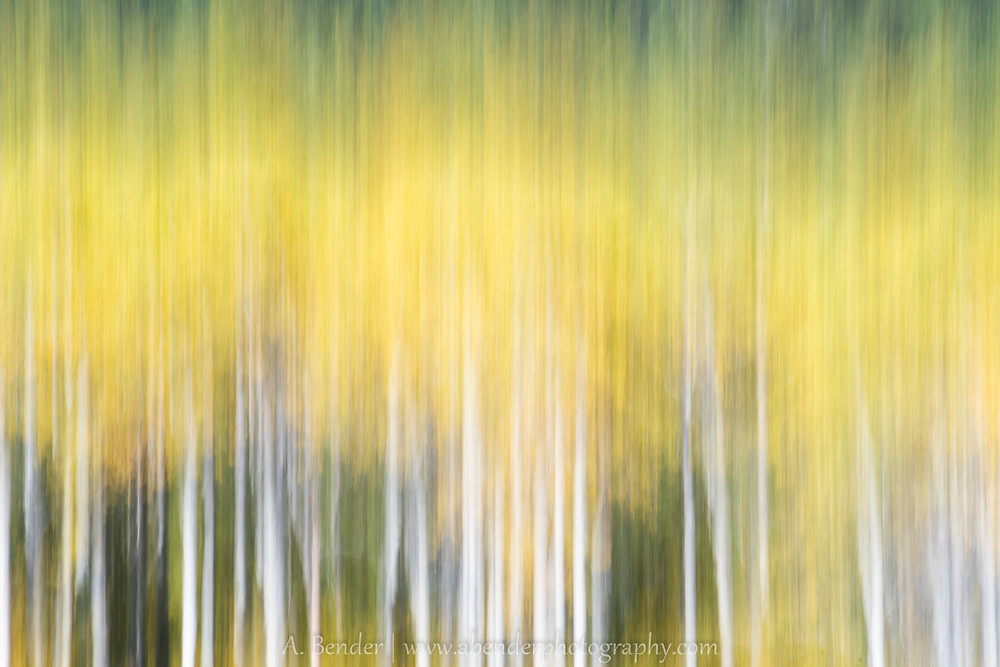 Aspen grove shot using abstract impressionistic techniques